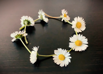 English daisies in a circle